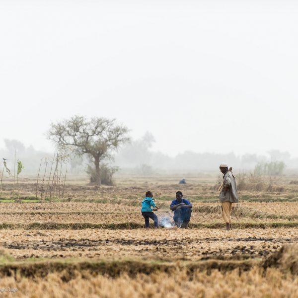 Developpement afrique