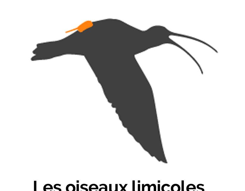 Exposition - Les oiseaux limicoles des pertuis charentais 2
